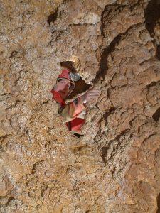 Szemlő-hegyi-barlang-Tű-foka